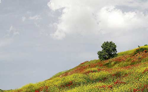 طبیعت زیبای استان کردستان در فصل بهار