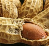 خواص بادام زمینی با پوست