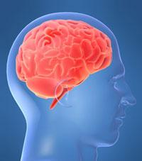 10 توصيه خوب براي حافظههاي بد - عکس مغز