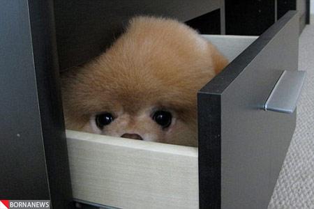 جذاب ترین سگ دنیا