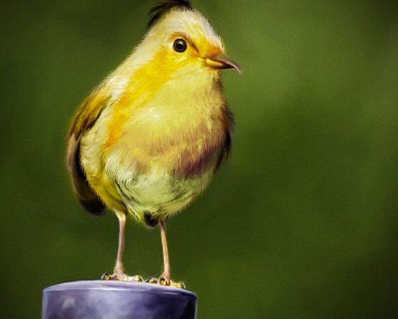نقاشي هاي جالب و زيبا از پرندگان