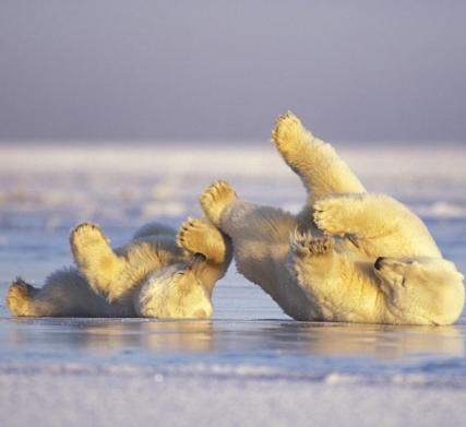 مادر و توله خرس قطبی
