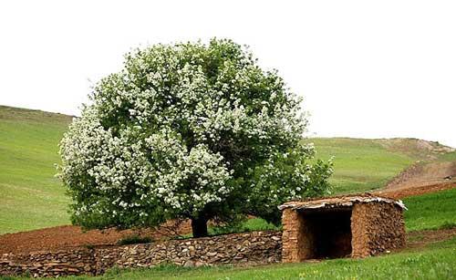 طبيعت زیبای استان کردستان در فصل بهار