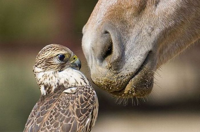 عکسای قشنگتر از طبیعت